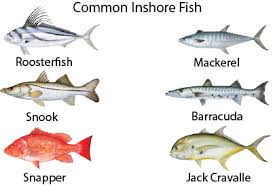 costa rica fish types